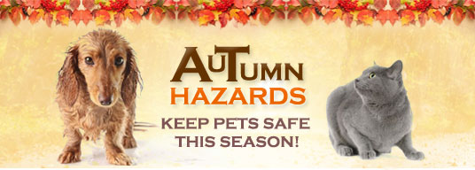 Image result for autumn pet