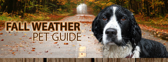 Fall Weather Pet Guide